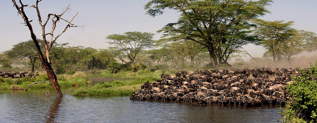 The Serengeti Great Migration