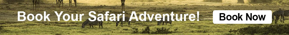 Book Your Safari Adventure